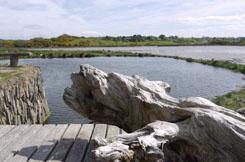 West Cork Driftwood