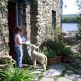 West Cork Lamb